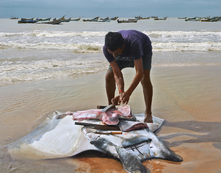 india fisherman: fisherman carve cuts of meat from a manta ray  Fishing boats in the ocean in the village Vadarevu of Andhra Pradesh, India Stock Photo