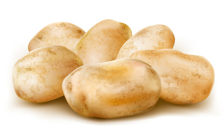 potato tubers in a group composed  vector illustration