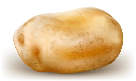 raw potato: one potato tubers on white background  vector illustration