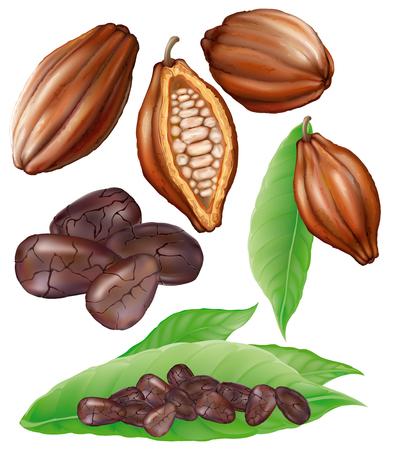 ココア フルーツ、カット フルーツ、穀物および白い背景の上の葉