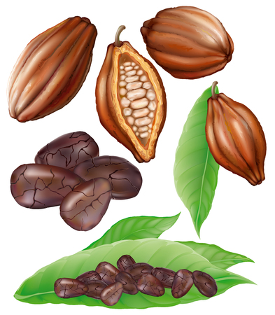 cacao: cacao fruta, fruta cortada, granos y hojas sobre un fondo blanco