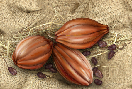 fruits and grains of cocoa on the background of old tissue