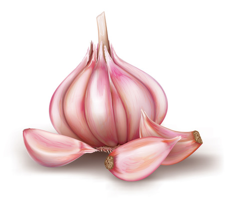 garlic and garlic bulb on a white background. vector illustration