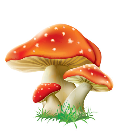 red fly agarics mushrooms on a white background. vector illustration