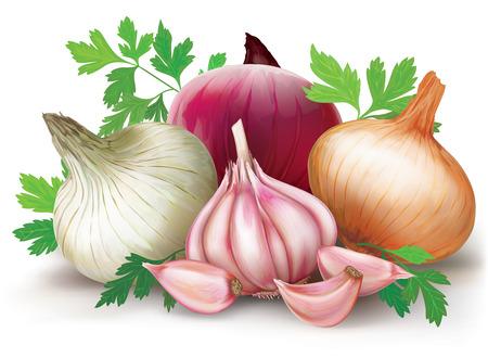 Drie uien bollen van verschillende kleuren en knoflook op een witte achtergrond. vector Stock Illustratie