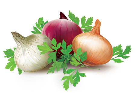 unpeeled: Three onions bulbs of different colors and parsley on a white background. vector