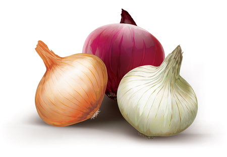 unpeeled: Three onions bulbs of different colors of yellow, white and purple on a white background. Illustration