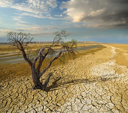 사막의 풍경 배경에 말라 죽은 나무