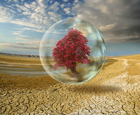 ecological problem: ecological problem. blooming tree inside protected sphere on desert background Stock Photo