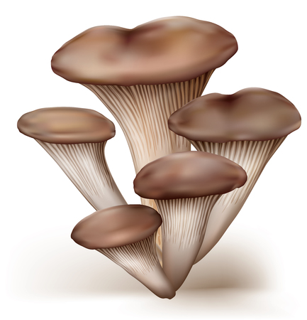 group of oyster mushrooms on a white background. vector illustration