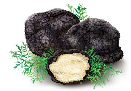 진미 버섯 검은 송로 버섯 - 흰색 배경에 희귀하고 비싼 야채