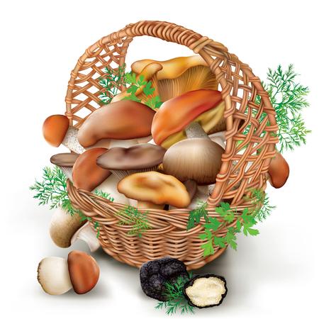 chanterelle: Fresh edible mushrooms in a wicker basket on a white background