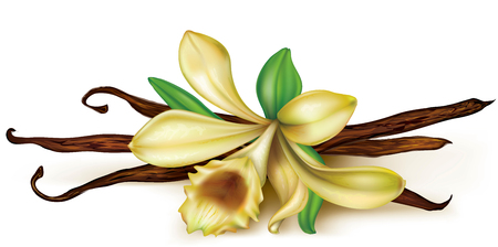 dry flower: vanilla flower and dry pods on a white background Illustration