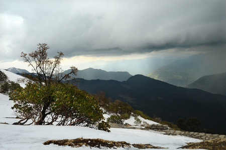 Rhododendrons in the snow on a background of stormy sky at ranges of Himalayas Stockfoto