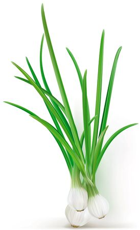 Green onions on the white background Illustration