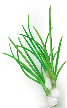 onions: Green onions on the white background Illustration