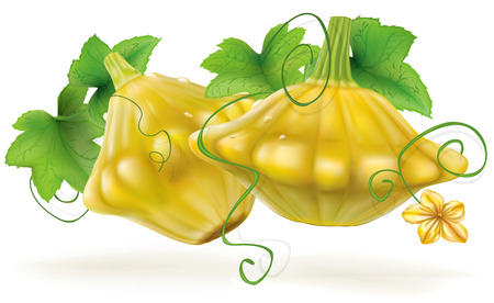 courgette: Ripe Scalloped Squash Patty Pan patisson on a white background