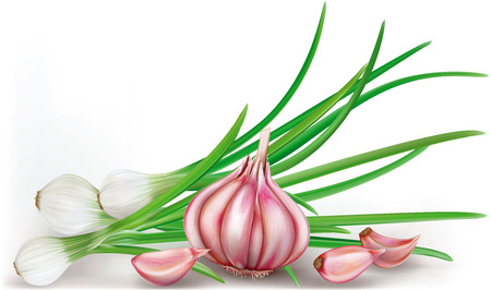 garlic bulb and green onions on a white bacground. vector Illustration