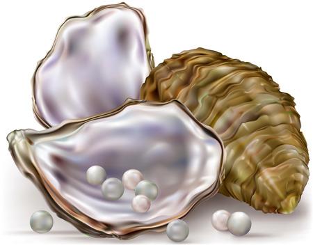 ostra: concha de ostra con perlas sobre un fondo blanco Vectores