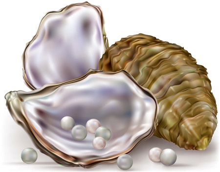 oyster shell with pearls on a white background