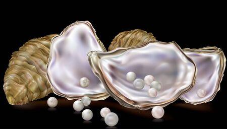 perlas: conchas de ostras con perlas sobre un fondo negro