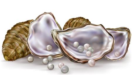 ostra: conchas de ostras con perlas sobre un fondo blanco