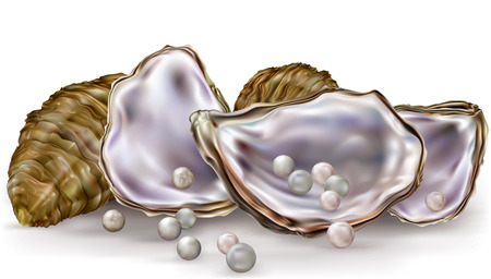 nacre: oysters shells with pearls on a white background Illustration