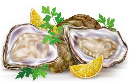 raw: Fresh opened oyster and lemon on white background Illustration