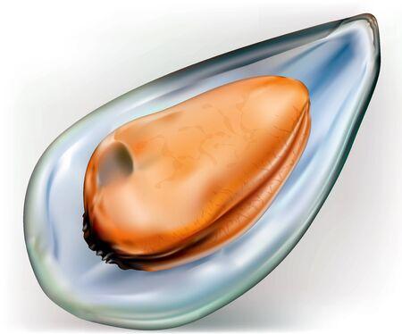 mussel on a open shells on white background Ilustração
