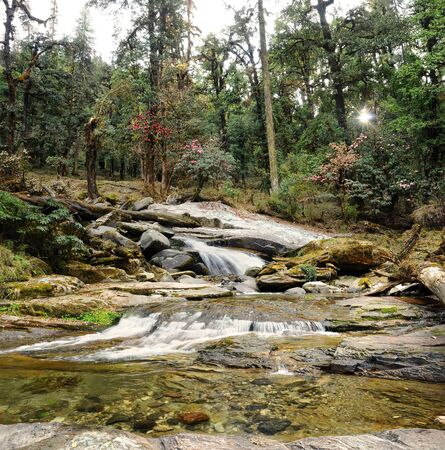 humid: rocky mountain stream in a deep humid forest in the Himalayas, India, Uttarakhand