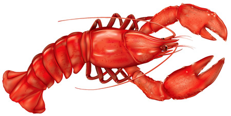 lobster dinner: boiled lobster on a white background. vector illustration