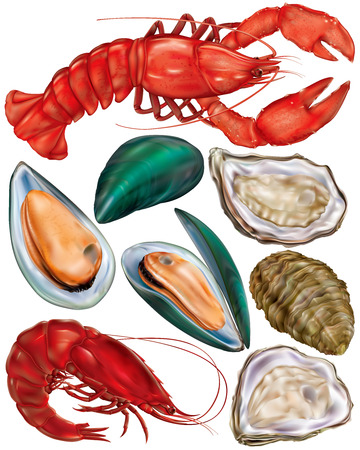 mariscos: set de productos del mar. langosta, ostras, mejillones y camarones. ilustración vectorial