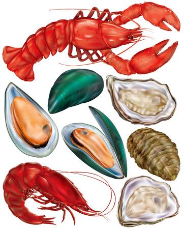 lobster: set of seafood. lobster, oysters, mussels and shrimp. vector illustration