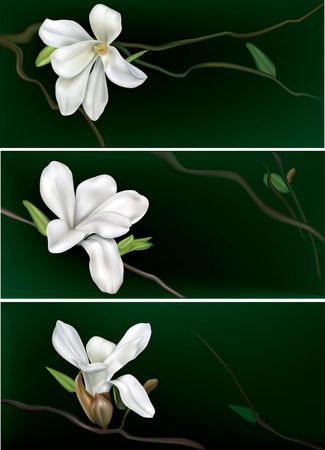 budding: three horizontal banners with white magnolia on a black background Illustration