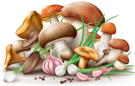 edible: Group of different edible mushrooms with garlic pepper onion