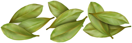 aromatic: Dried aromatic bay leaves on white background. Vector illustration