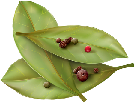 bay: Bay leaves from the colored mix pepper corns. Vector illustration