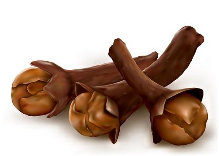 dry cloves on white background. vector illustration