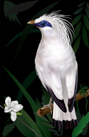 rare: Bali Myna Leucopsar rothschildi rare endemic bird and faunal emblem of Bali. vector illustration