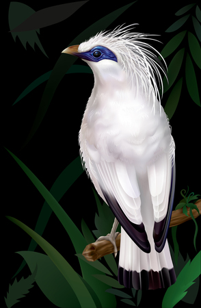 rare animals: Bali Myna Leucopsar rothschildi rare endemic bird and faunal emblem of Bali. vector illustration