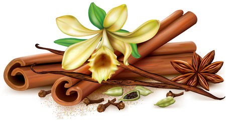 Aromatic spices vanilla, cinnamon, anise, clove, cardamon. Vector illustration.