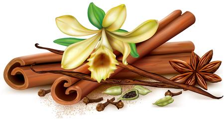 Aromatic spices vanilla, cinnamon, anise, clove, cardamon. Vector illustration. Illustration
