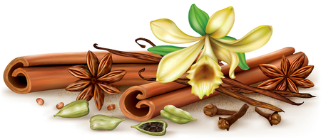 aromatic: Aromatic spices vanilla, cinnamon, anise, clove, cardamon. Vector illustration. Illustration