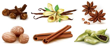 Different spices set on white background. Illustration