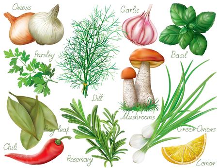 aromatic: Set with green herbs and spices on white background. illustration Illustration