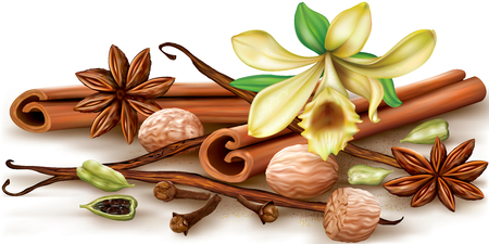 Dry aromatic spices and vanilla flower on a white background. illustration.