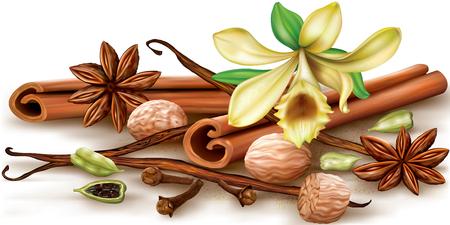 vainilla flor: especias aromáticas secas y flor de vainilla sobre un fondo blanco. ilustración.