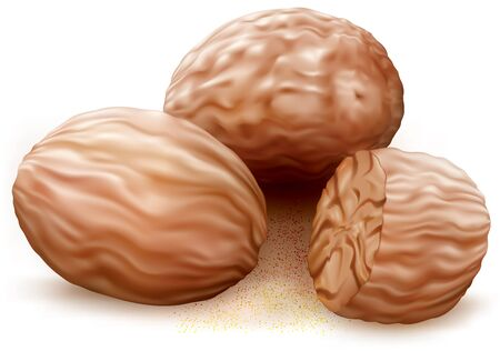 odorous: Nutmegs on white background. illustration