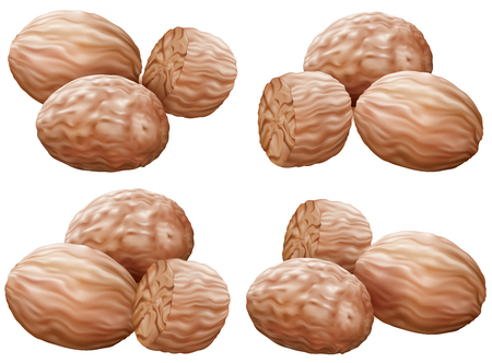 odorous: Nutmegs in different compositions on white background. illustration Illustration