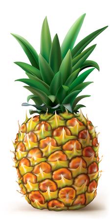 白い上にパイナップル。ベクトル図